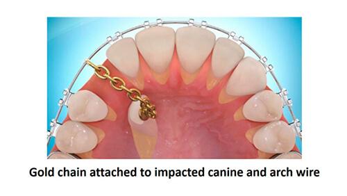 canine-exposureillustration